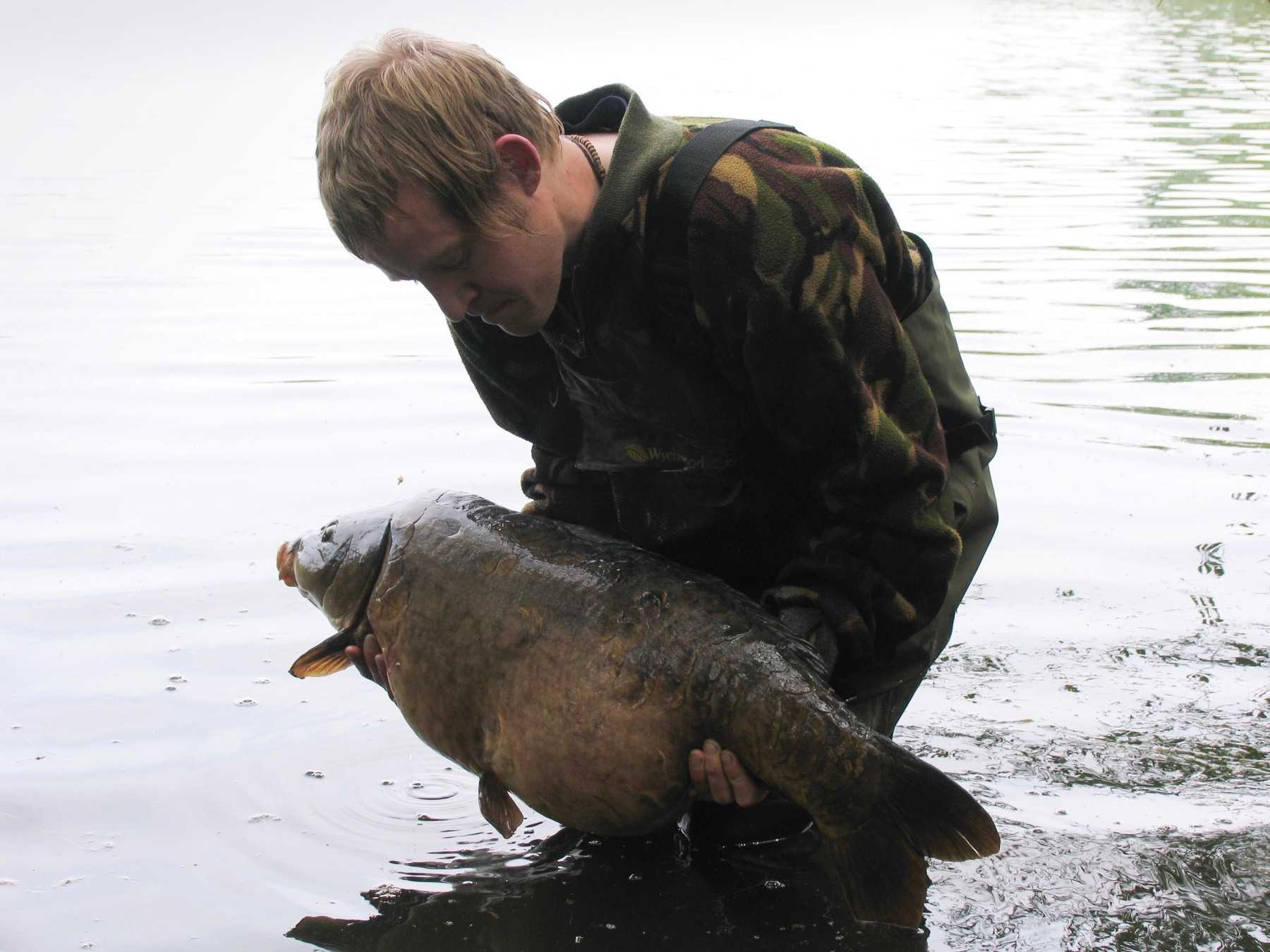 Burghfield was a hugely demanding place in terms of tackle requirements and any inferior components were quickly exposed! The biggest surviving original during my time on the lake, Double Stomach about to be released