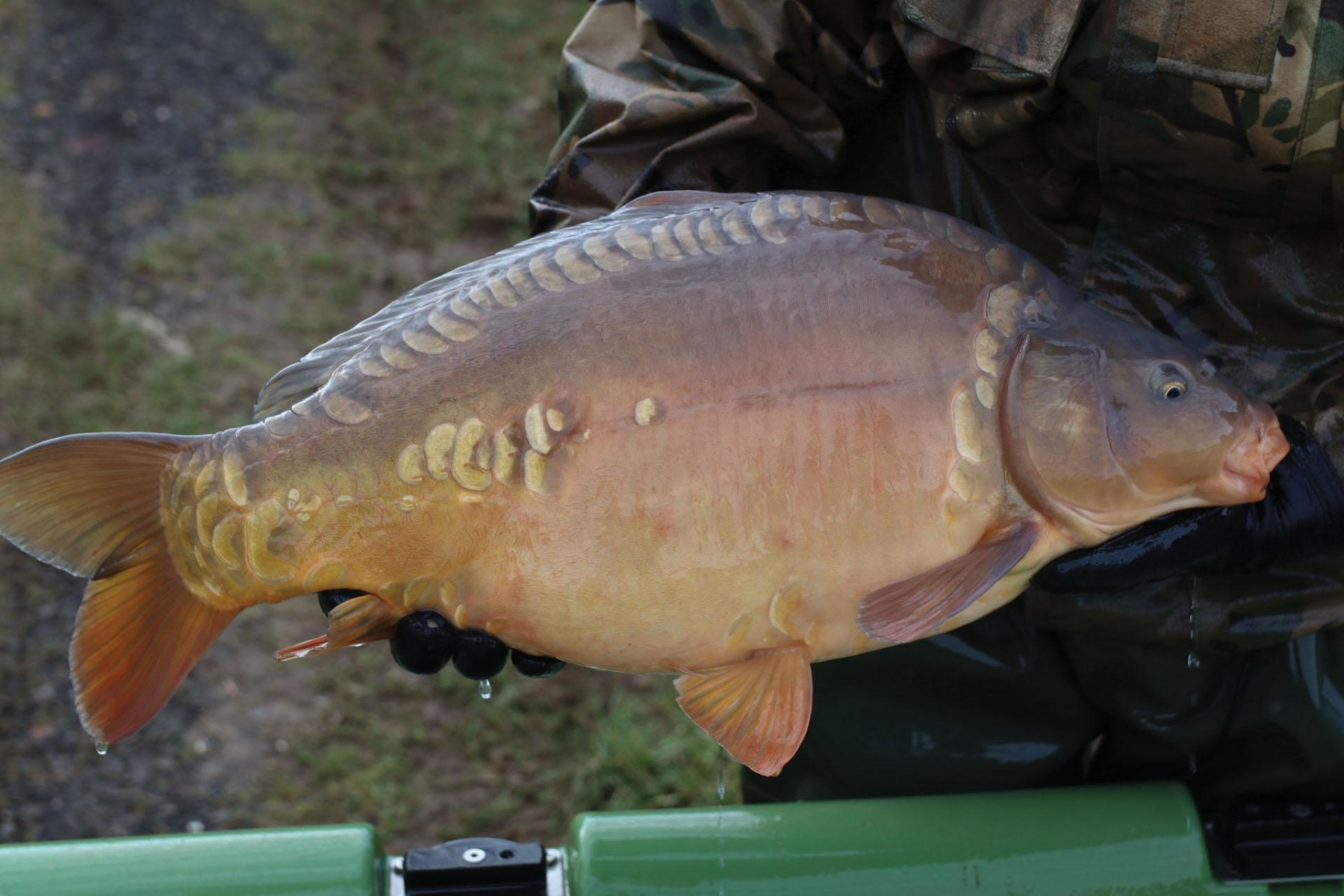A super stunning, chunky Dink strain