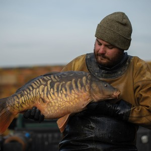Research has shown that carp, like many fish species, have well developed colour vision