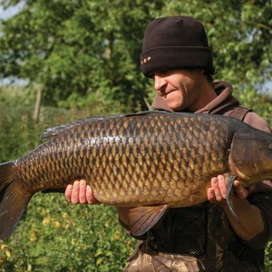 Big pit common. Mean and lean
