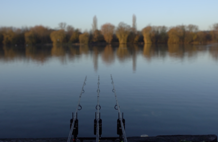 CARPology On Tour: Willow Park